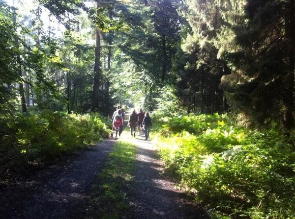 Reichswald.jpg