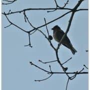 vogel door Bart Kouwenberg