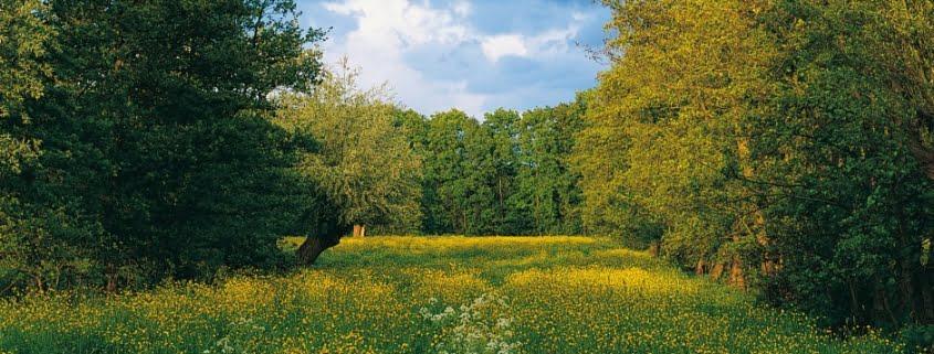 Vereniging Nederlands Cultuurlandschap