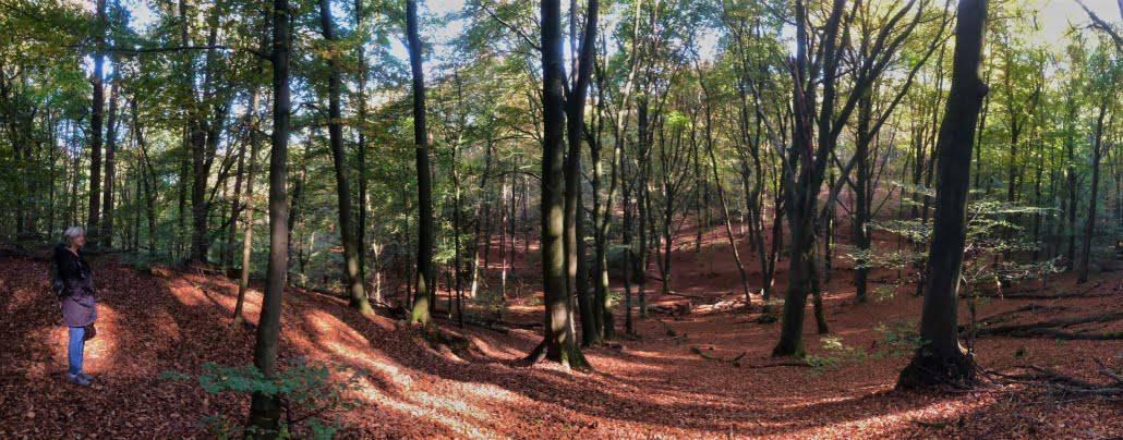 Duivelsberg, Walk of Wisdom